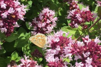 Butterfly and moth in a flowerbed