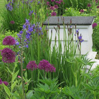 An white ornamental beehive in a border with irises and alliums